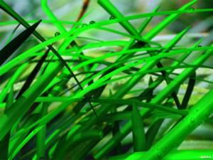 springgrass_www